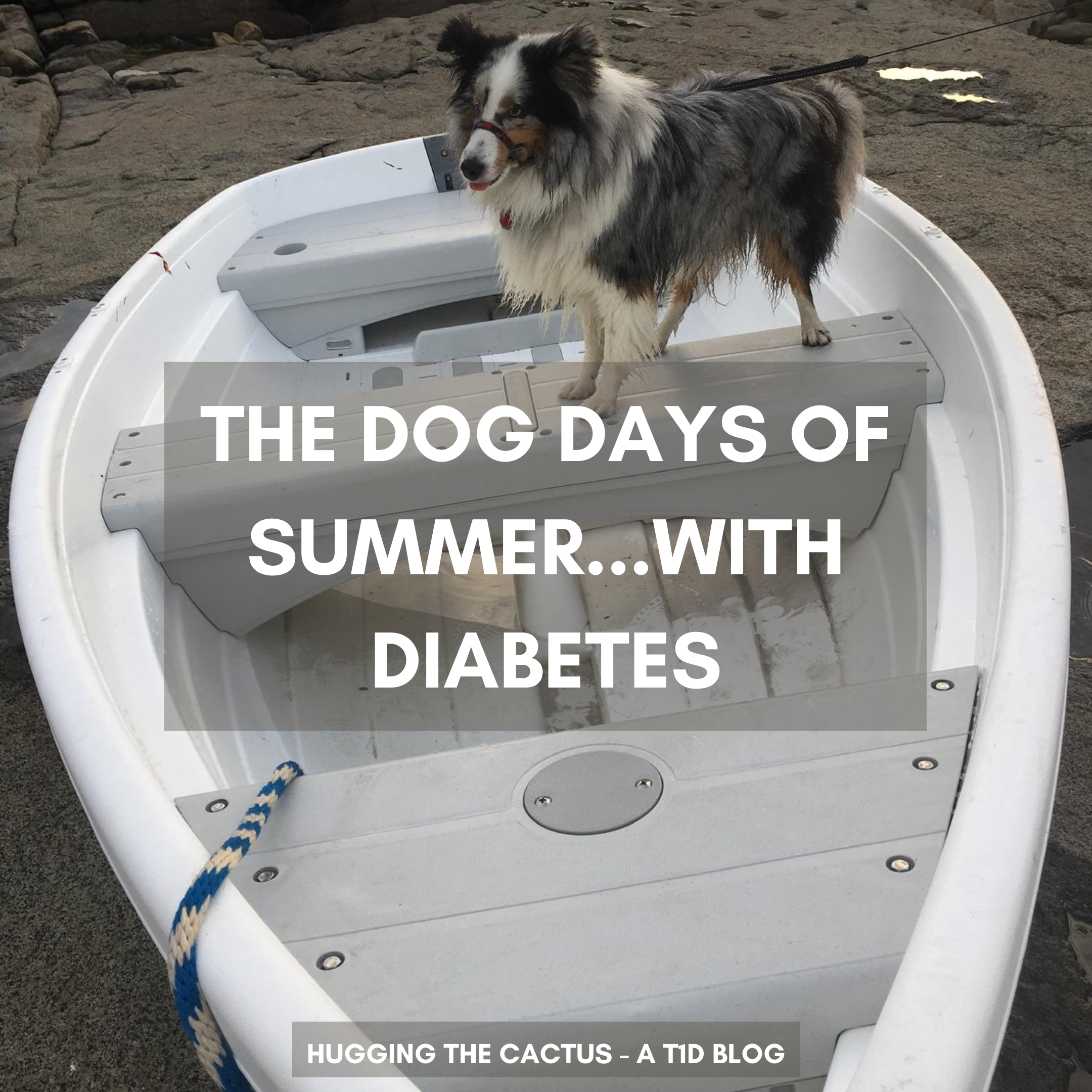 The Dog Days of Summer...with Diabetes
